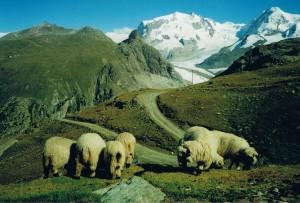 Zwitserland Reizen