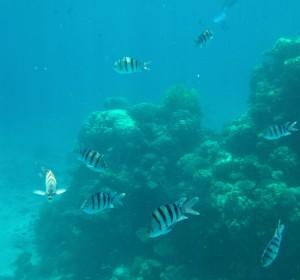 De prachtige onderwaterwereld van de Rode zee: Eilat