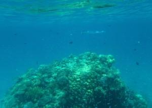 Prachtig snorkelen in en rondom Eilat