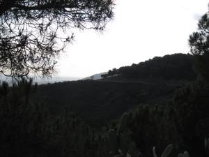 Natuur buiten de stad