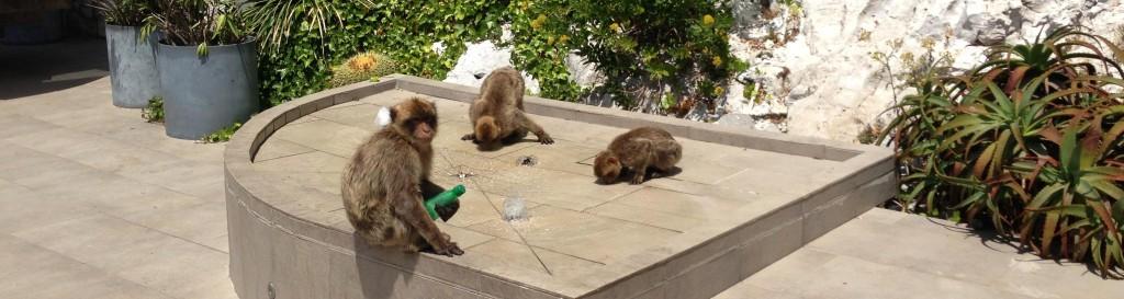 Vrolijke aapjes