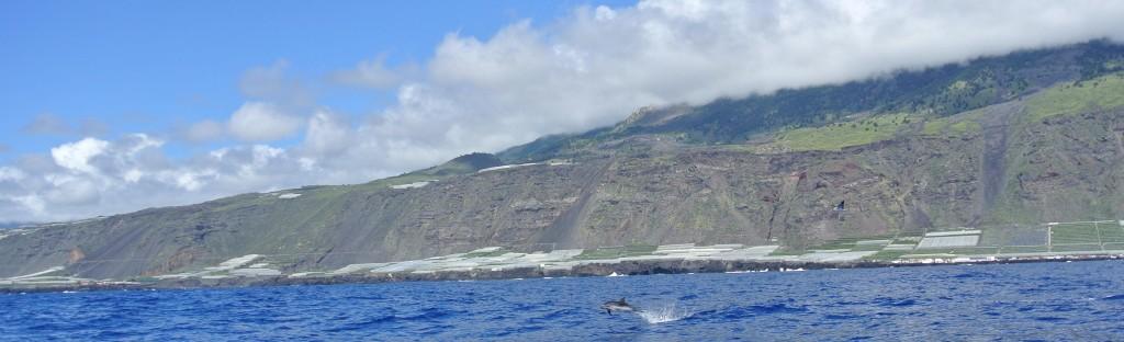 Prachtig zicht op het eiland en dolfijnen genoeg