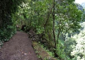 Wandelen in een prachtig bos en laurierplanten