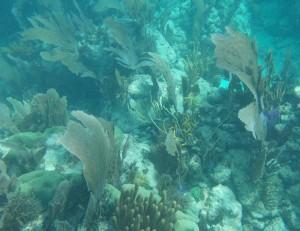 Prachtig koraal tijdens de snorkeltocht
