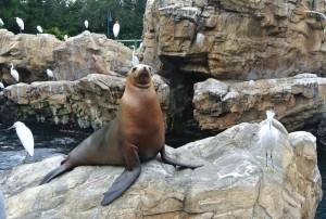 Vrolijke zeeleeuw, nog meer reigers!
