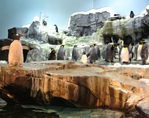 De nieuwe Artic experience met de Pinguïns!