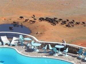 Prachtig zicht op de honderden buffels vanuit de lodge!