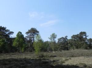 Nationaal park De Veluwe