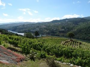 Langs wijngaarden, langs de rivier. Prachtig zicht als je de bocht om bent!