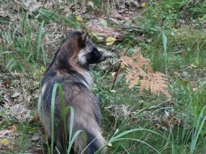 De wasbeerhond zit vlakbij