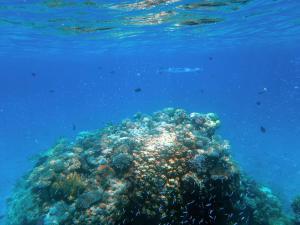 De prachtige onderwaterwereld van de Rode Zee