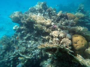 Geniet van Koraal en verschillende vissen in de Rode Zee