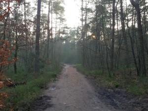 Genieten van het bos rondom Landal Coldenhove