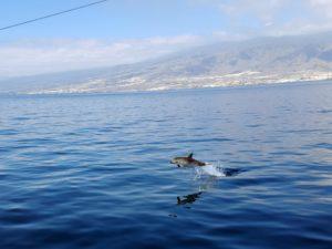 een dolfijn kwamen we wel tegen.